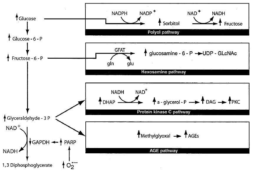 Brownlee's unifying mechanism