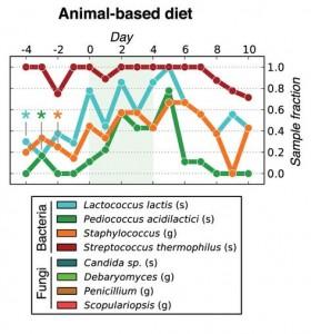 animal-based diet