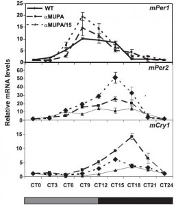 strong circadian rhythms