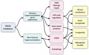 HDAC inhibition