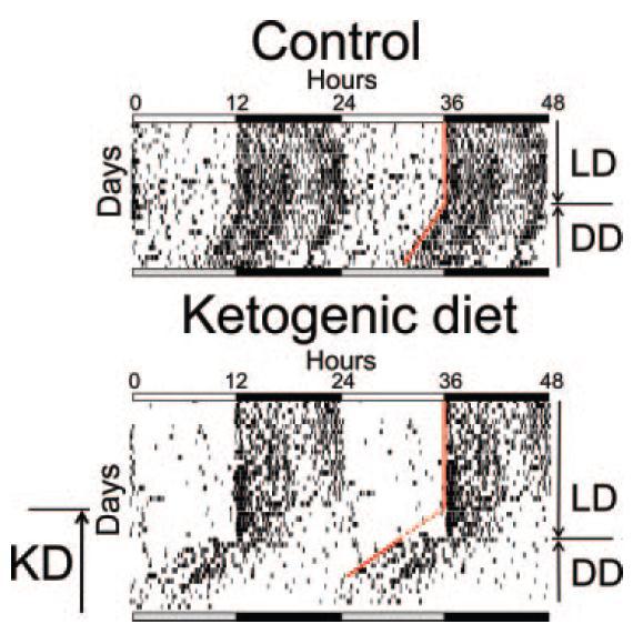 Ketogenic circadian phase