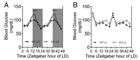 circadian glucose