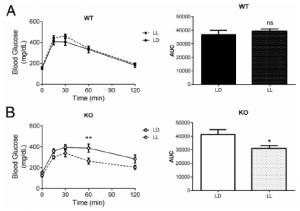 circadian misalignment glucose tolerance