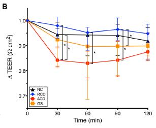 gluten increases intestinal permeability