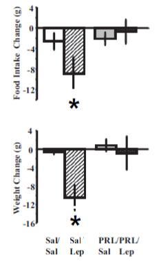 prolactin leptin resistance