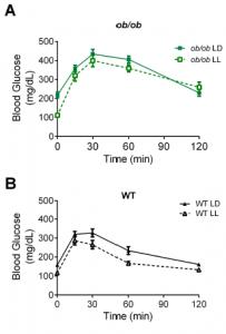 leptin obesity melanocortins