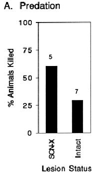 scn-lesion-activity-survival