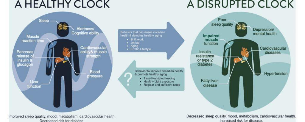 circadian diet vs intermittent fasting